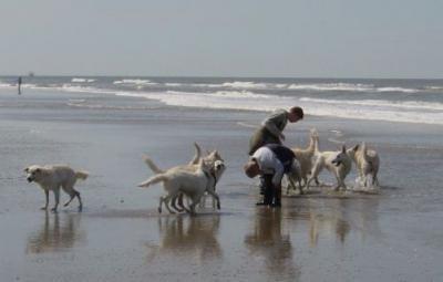 Strand wandeling Misthy's Friends