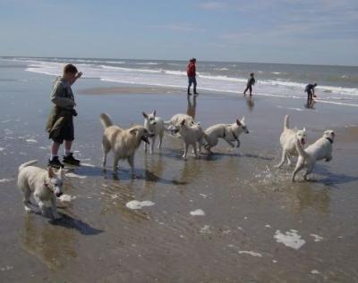 Een heerlijke strand wandeling