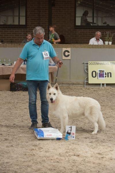 Zwitserse witte herder reu Nio op Show