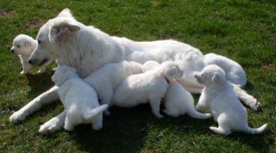 Deyna speelt met haar pups