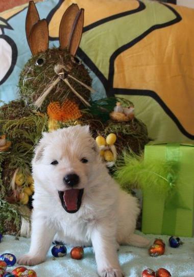 Foto's 6 April 2012 H Nest