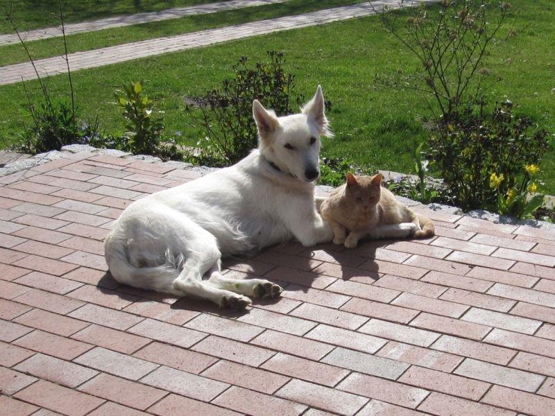 Misthy's Friend Indi met haar pup