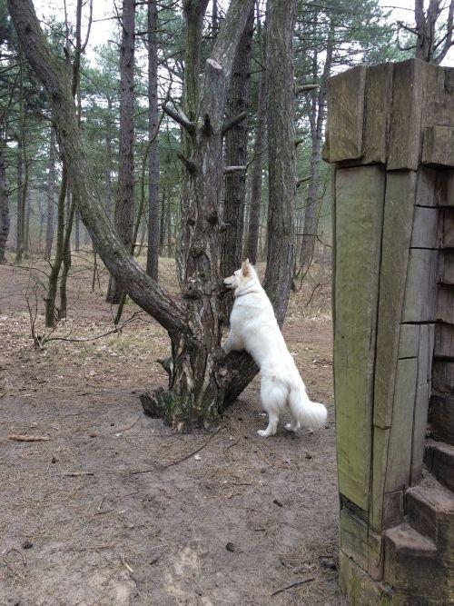 Misthy's Friend Isa in het bos