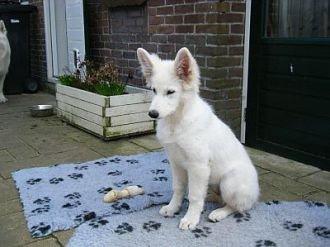 Misthy's Friend Isa pup
