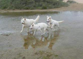 Misthy's Friend Isa spelen met vrienden