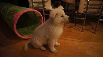 Misthy's Friend Ita Casper pup