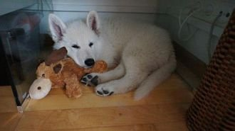 Misthy's Friend Ita Casper puppy