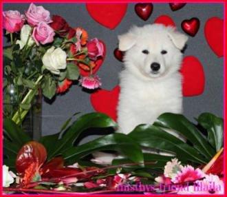 Valentine foto's 2013