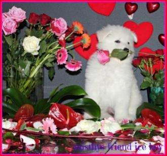 i nest Valentine foto's