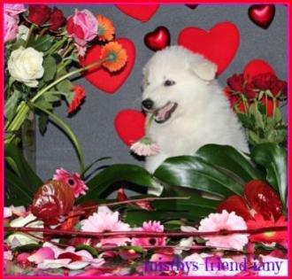 Misthy's Friends Valentine foto's