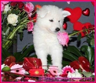 14 februari 2013 Valentine foto's