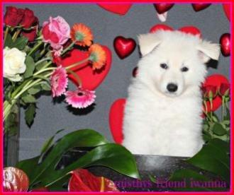 14-2-2013 Valentine foto's