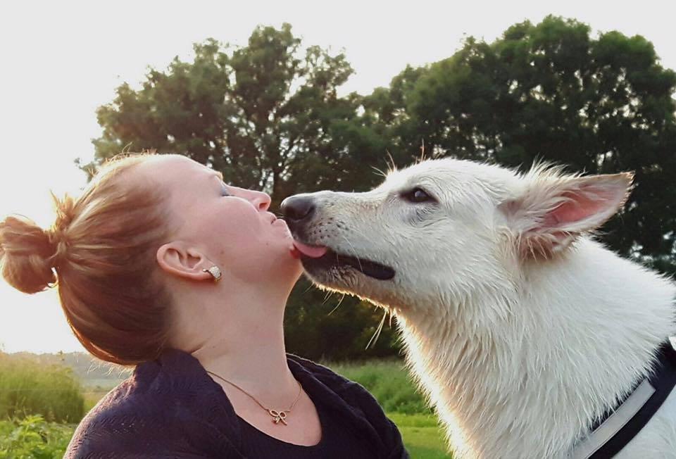 Zwitserse witte herder Jasmijn kus