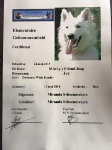 Misthy's Friend Joop - Jay examen