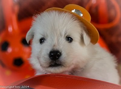 3 juni 2014 J nest misthy's friends puppy Reu Wit