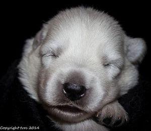 21 mei 2014 Pup Reu Oranje