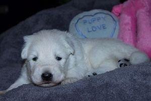 28 mei 2014 Misthy's Friends pup Reu groen nu bruin