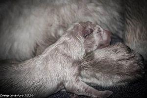 Geboorte foto's J nest Misthy''Friend