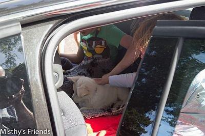 Misthy's Friends Luna (K-Nest) in de auto