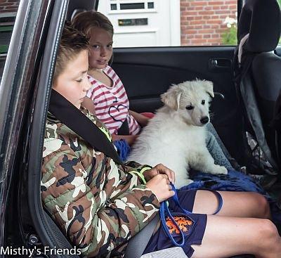 Misthy's Friends Kelly King Spike (K-Nest) in de auto