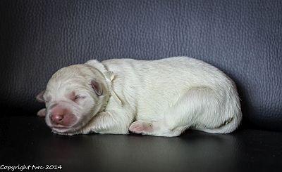14 mei 2020 K-nest Enjoy pup Teef Wit