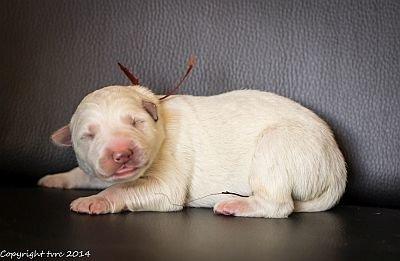 14 mei 2020 K-nest Enjoy pup Reu Bruin