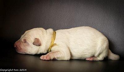 14 mei 2020 K-nest Enjoy pup Reu Goud