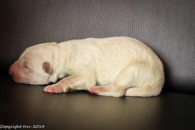 14 mei 2020 K-nest Enjoy pup Reu zonder Bandje