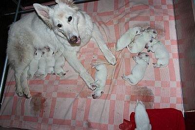 16 mei 2014 K-nest Enjoy pup
