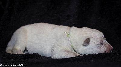 18 mei 2014 K-nest Enjoy pup Teef Groen