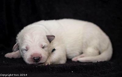 18 mei 2014 K-nest Enjoy pup Reu Blauw