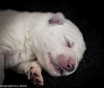 18 mei 2014 K-nest Enjoy pup Teef zonder Bandje