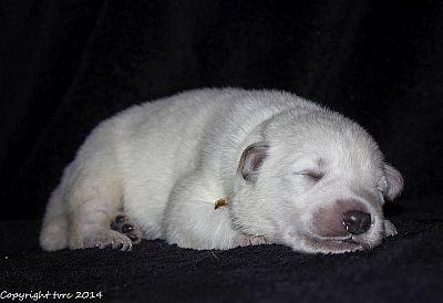 21 mei 2014 K-nest Enjoy pup Reu Goud