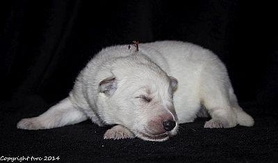 21 mei 2014 K-nest Enjoy pup Reu Bruin