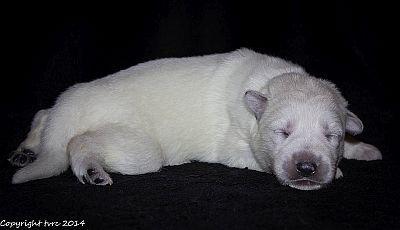 21 mei 2014 K-nest Enjoy pup Teef zonder bandje