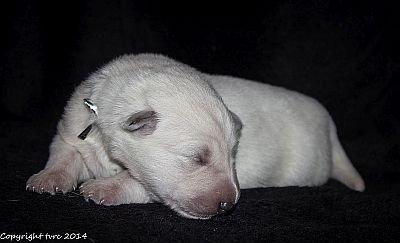 21 mei 2014 K-nest Enjoy pup Teef Zilver