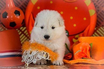 3 juni 2014 K nest Misthy's Friend Enjoy Pup Teef Blauw Roze