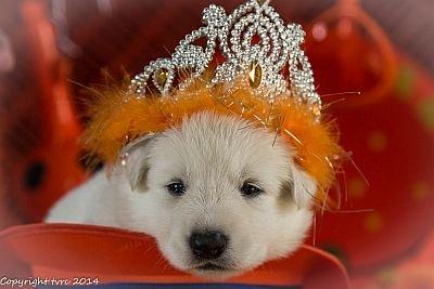 3 juni 2014 K nest Misthy's Friend Enjoy Pup Teef Orange