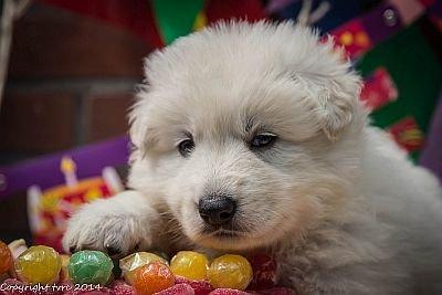 11 juni 2014 K nest Misthy's Friend Enjoy Pup Teef Roze