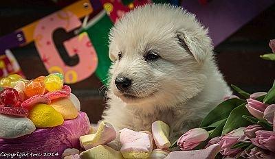 11 juni 2014 K nest Misthy's Friend Enjoy Pup Teef Rood