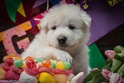 11 juni 2014 K nest Misthy's Friend Enjoy Pup Reu Zwart