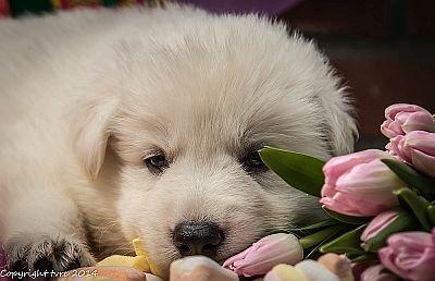 11 juni 2014 K nest Misthy's Friend Enjoy Pup Reu Bruin