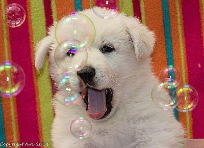 18 juni 2014 K nest Misthy's Friend Enjoy Pup Reu Wit Roze