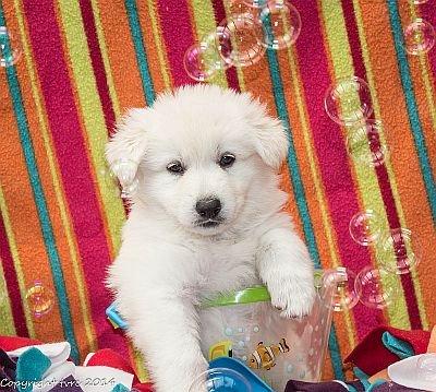 18 juni 2014 K nest Misthy's Friend Enjoy Pup Teef orange
