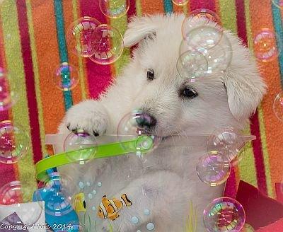 18 juni 2014 K nest Misthy's Friend Enjoy Pup Teef Blauw