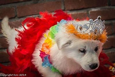 26-06-2020 Misthy's Friends K-nest pup Reu Zwart