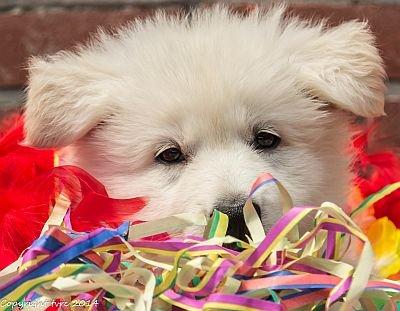 26-06-2020 Misthy's Friends K-nest pup Reu Roze-Wit