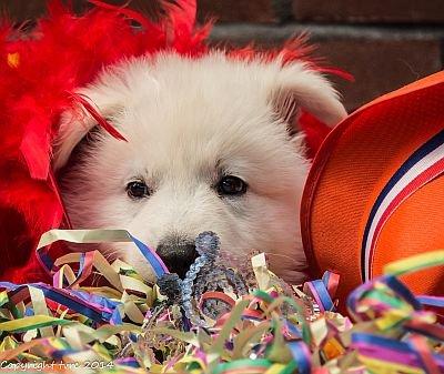 26-06-2020 Misthy's Friends K-nest pup Reu Bruin