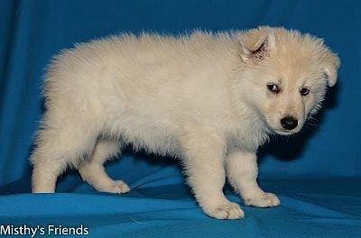 27-06-2014-Misthy's Friends -K nest Pup Kiyo