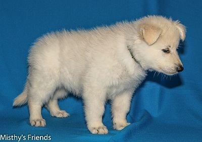 27-06-2014-Misthy's Friends -K nest Pup Lola